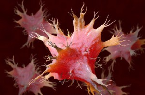 Dendritic cells, copyright Science Photo Library