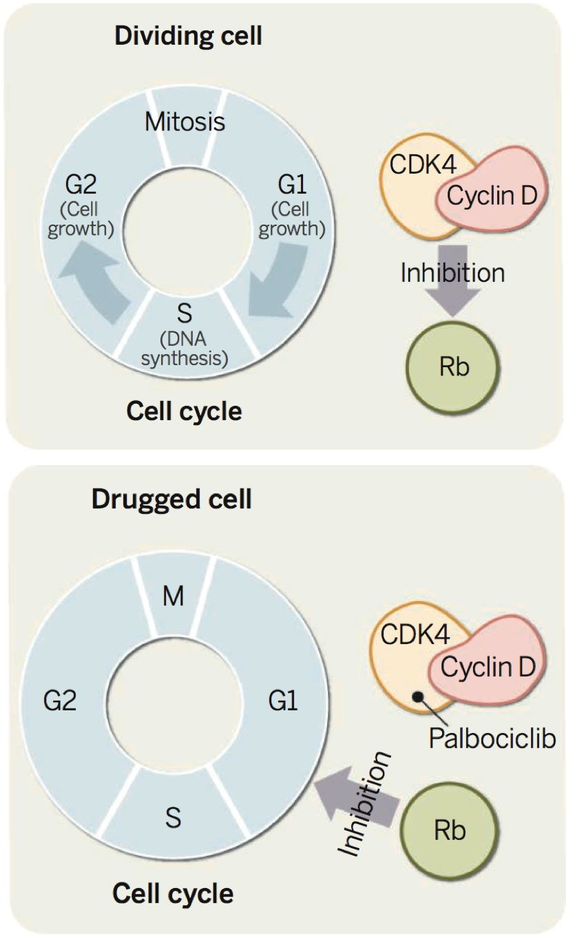 Inhibition of cell cancer growth. © AAAS